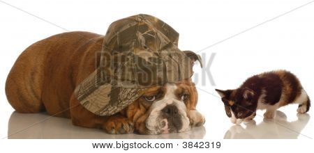 Dog Wearing Hat With Kitten