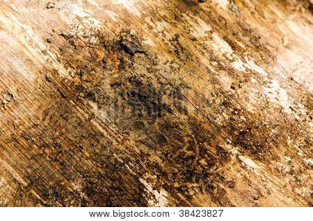 Background Of Log Without Bark Closeup Textures