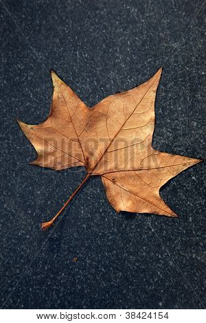 herfstblad op zwart marmer