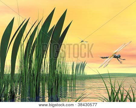 Dragonflies Upon Pond