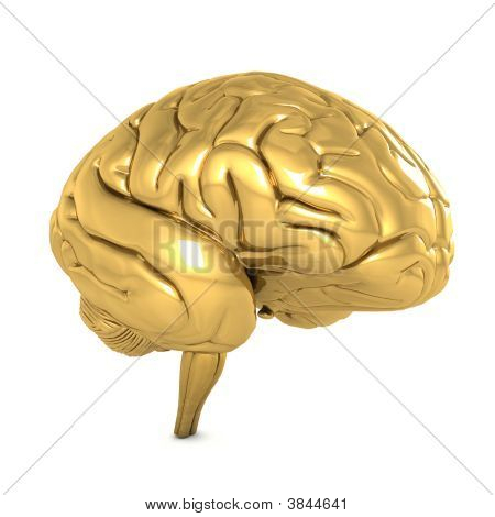 Gold Brain Isolated On White