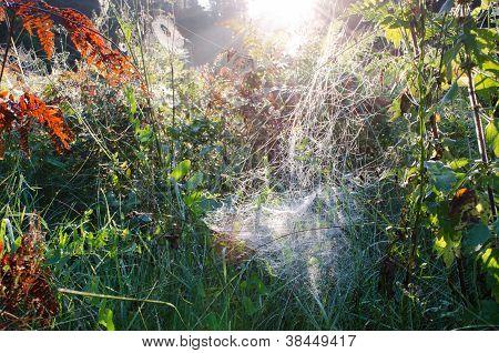 Herfst ochtend Dewy Spiderweb op planten zonlicht