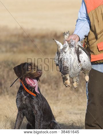 Grouse Hunting