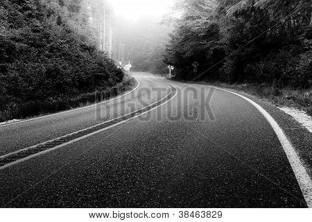 Coastal Foggy Road