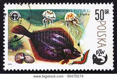 Postage stamp Poland 1979 Flounder, Platichthys Flesus, Fish