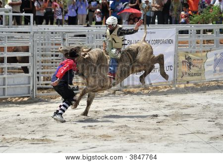 Bull Riding At Rodeo Show