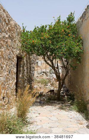 Flowering Green Tree Growing On Narrow Street Between Stone Walls