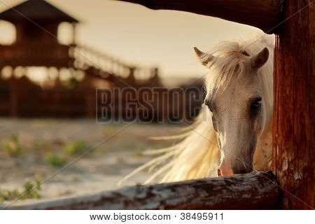 white horse on the ranch