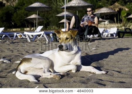 Dog On Tropic Beach