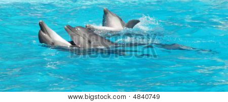 Os golfinhos