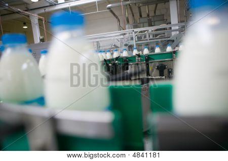 Dairy Plant.