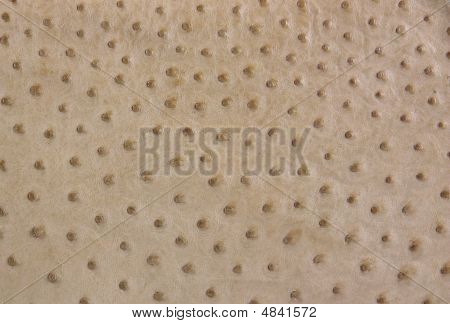 Background Of Ostrich Leather