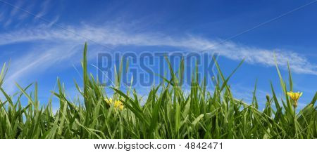 Grass And Sky Panorama