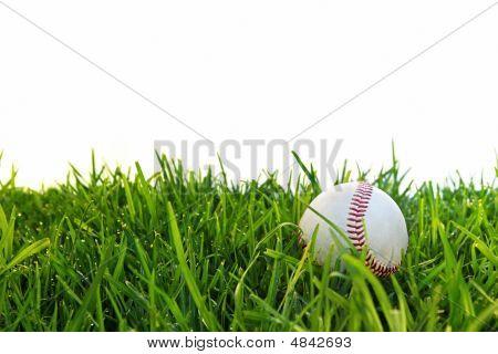 Baseball In Dewy Grass