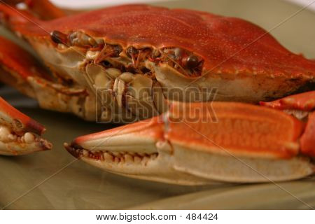 Boiled Crab Up Close