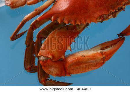 Boiled Crab On Blue