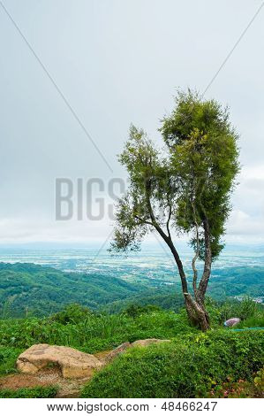 Tree On Mountain With Cloudy
