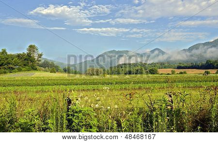 Mountains And Farm