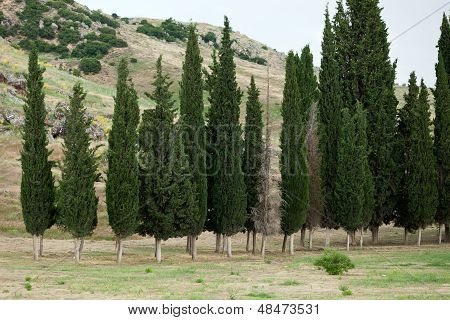 Idyllic landscape with green cypress, Tuscany, Italy