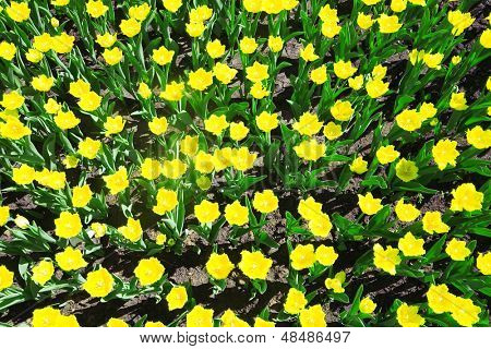 bright and beautiful yellow summer flowers