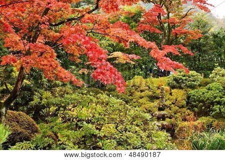 Japanese garden in Nikko, Japan.