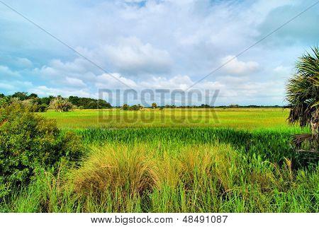 Dinner Island Marsh