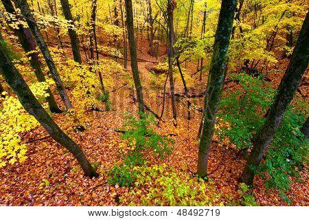 Paisaje hermoso otoño Illinois