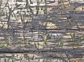 Weathered Wet Wooden Background poster