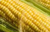 picture of corn-silk  - Close up of sweetcorn with corn silk over cob - JPG