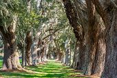 stock photo of old spanish trail  - LInes of old oak trees around a lane of green grass - JPG