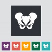 stock photo of pelvis  - Anotomy Pelvis icon - JPG