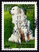 Postage Stamp France 1999 Pyrenean Mountain Dog, Pet