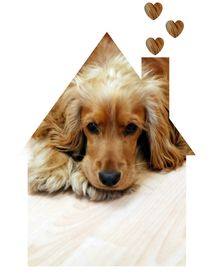 stock photo of dog-house  - picture of small dog in house illustration - JPG