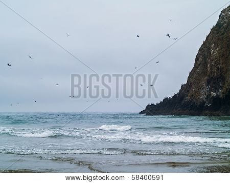 Seabirds Flying Over A Rocky Beach On The Oregon Coast Usa