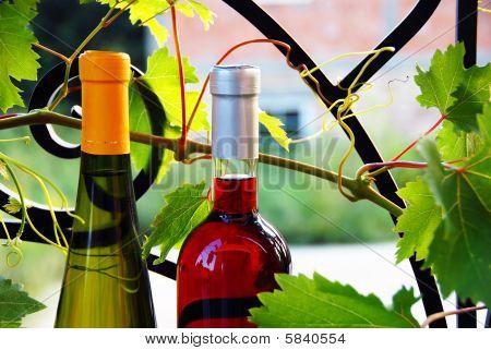 Wine Bottles Between Vine Leaves