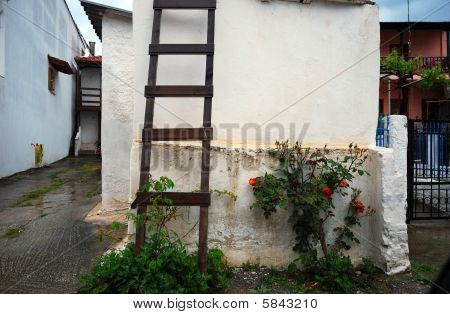 wooden ladder and roses