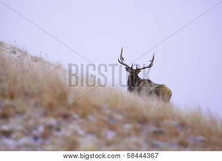 wonder elk