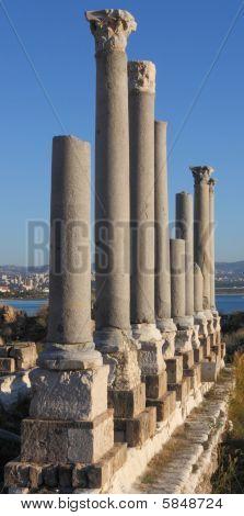 Roman Columns At Tyre Lebanon