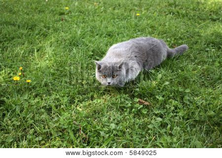 Cat Hunting In The Yard