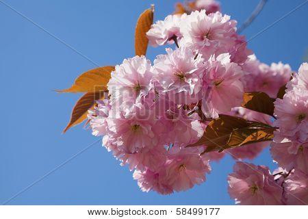 Pink Tree Brunch