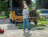 foto of arborist  - A Man Putting Branches in a Wood Chipper - JPG