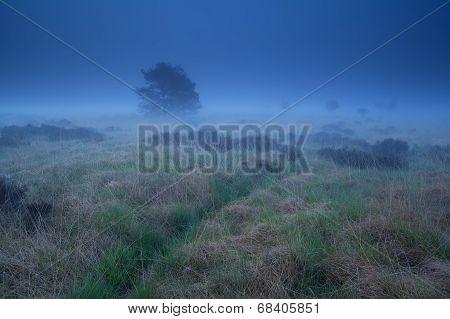 Misty Marsh In Dusk