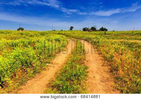 rut rural road among summer meadow