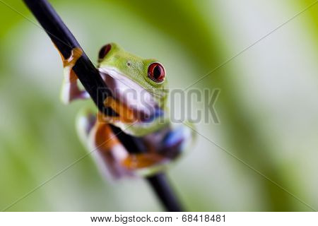Frog in the jungle