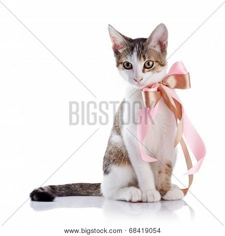 Kitten With A Bow.