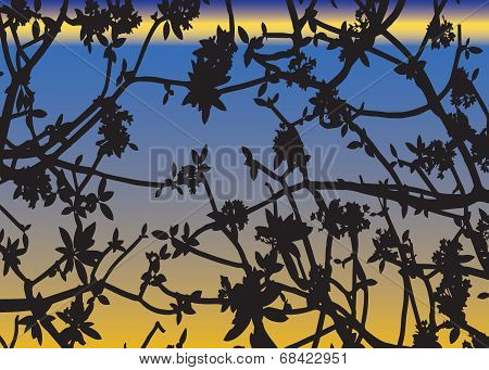 Shadow Of Leaves Virtual Sunset Baclground Vector