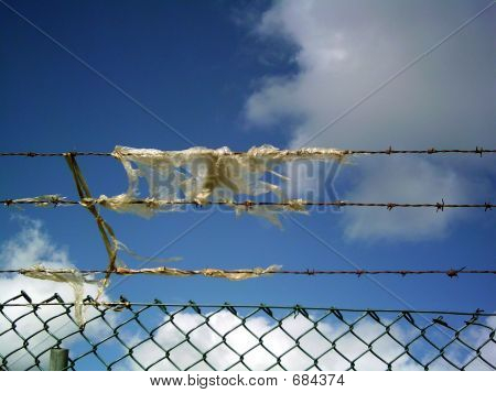 Barbed Wire 1