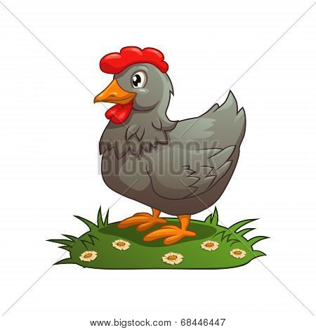 Gray chicken on the grass