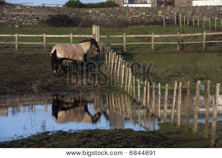 Horses In A Wet Field