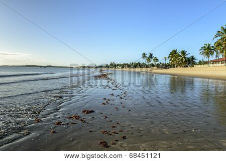 Beach Of Pititinga At Low Tide (brazil)